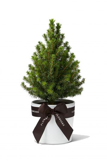 Flowerbx-Christmas-Tree-2
